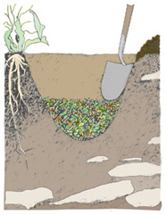 Composting: Soil Incorporation